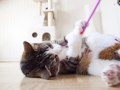 A cat playing with a string toy
