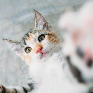 Kittens are sharp.
