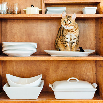 A ginger tabby cat sits in a ceramic bowl on a shelf