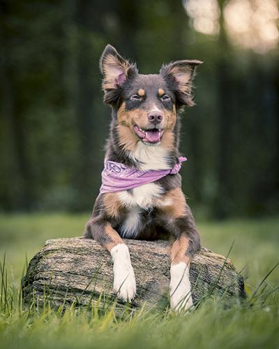 Superdog sitting on a log