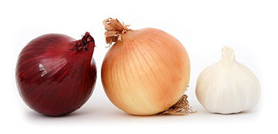 Garlic and Onions Should not Be Fed to Dogs