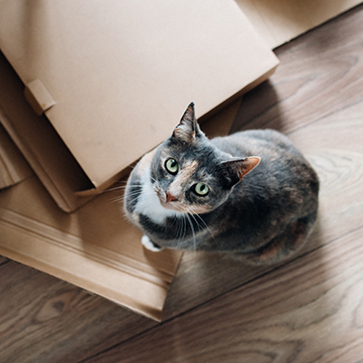 A cat looking suspicious as she explores cardboard
