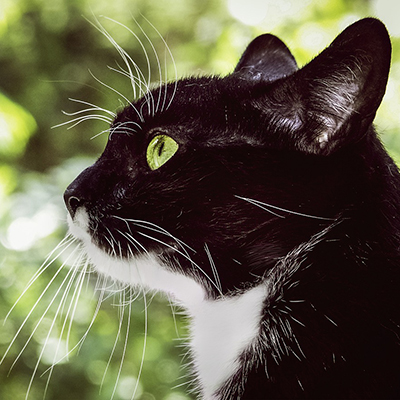 Black cat with long whiskers