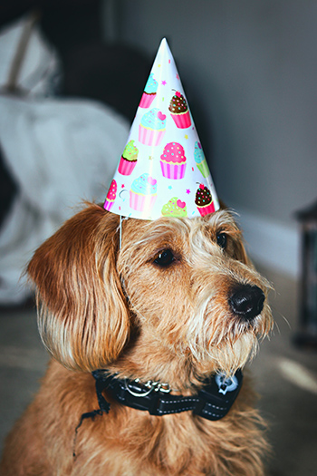 This dog is ready to party.